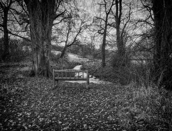 The leaves have fallen (II) by BillRookery