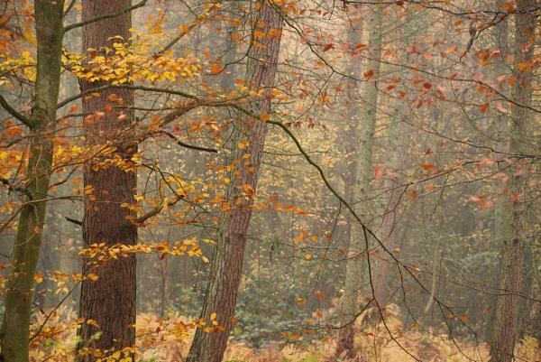 autumn by alfpics