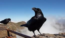 Birds on a Volcano ...