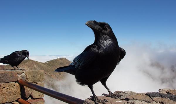 Birds on a Volcano ... by SocksAndStuff