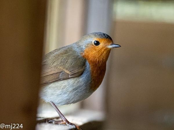 Mr Robin by MJ224
