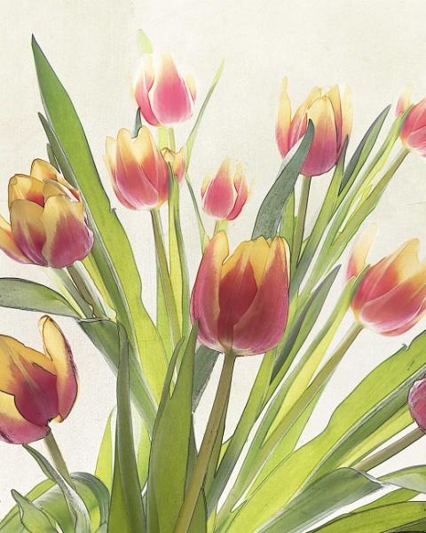 Tulip Garden by swilliams71
