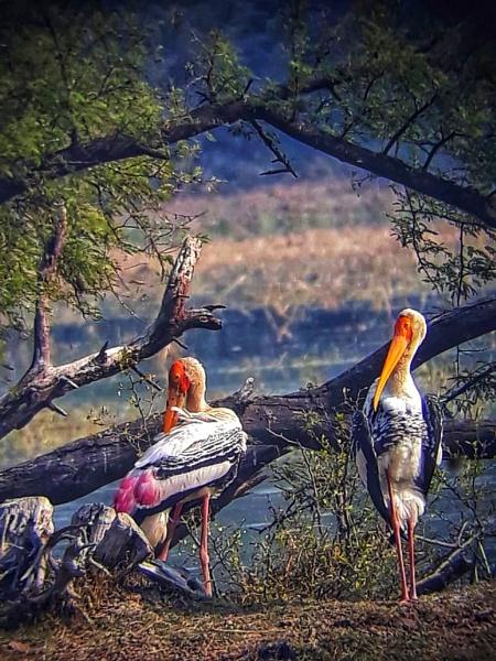 Birds by Nityam