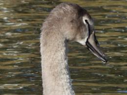 Binghams Pond