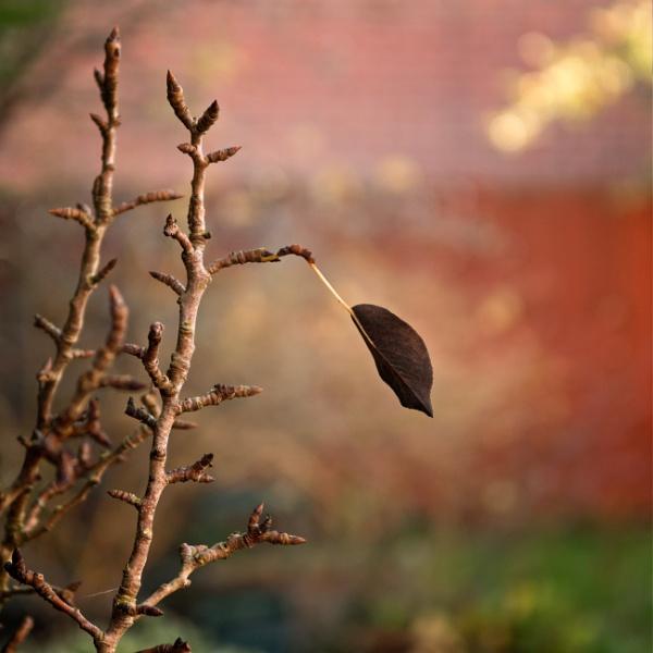 Leaf by John21
