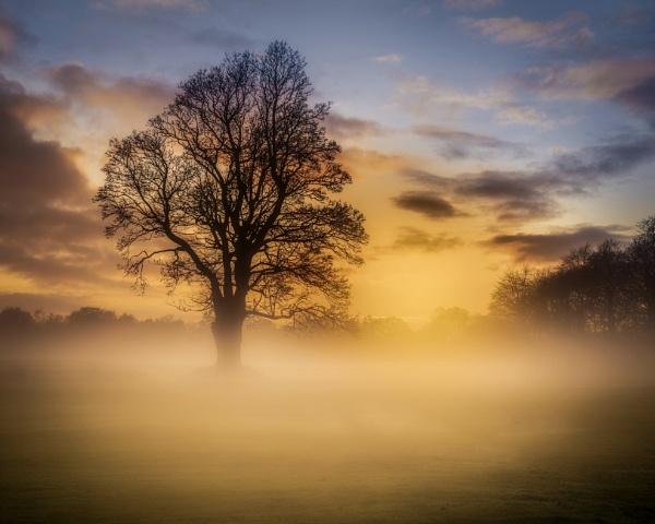 Pollok Park Sunset by Mark_Callander