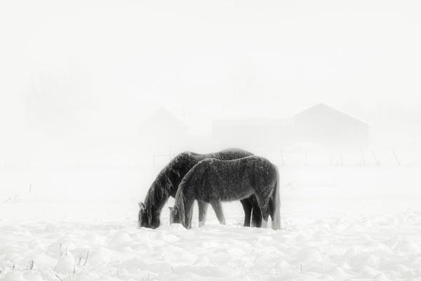 Winter Horses by mlseawell