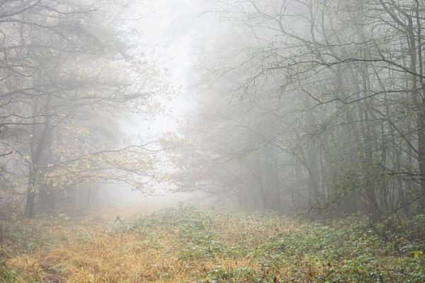 Misty Wonderings by DalesLass