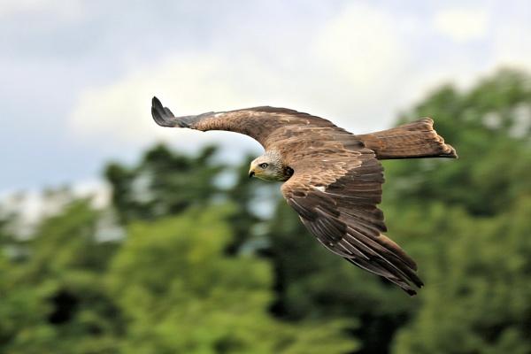 Gliding by Denby99