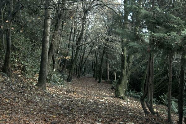 Woodlands by gunner44