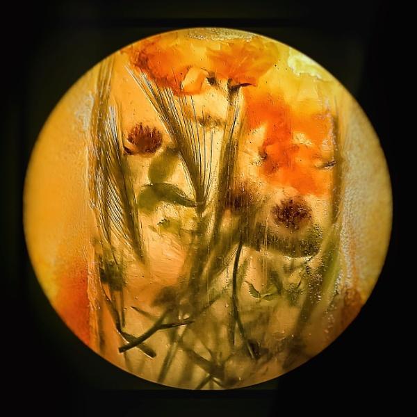 Frozen Wild Flowers by LoryC
