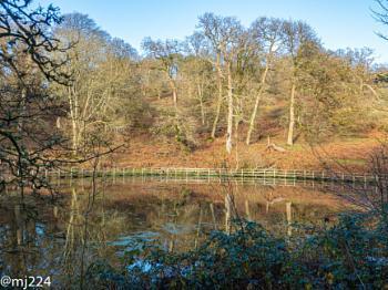 Dinefwr Mill Pond