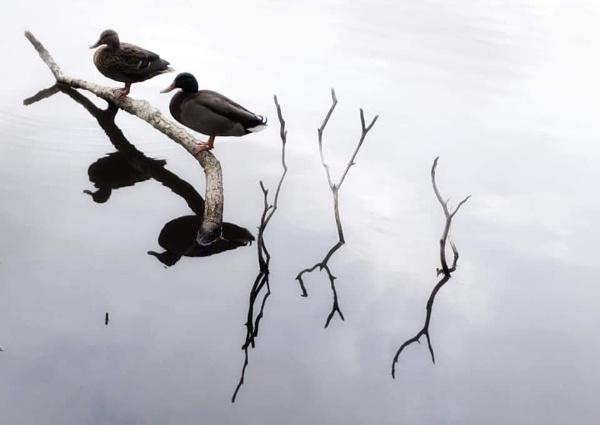 Duck & Dive by Skinwalker