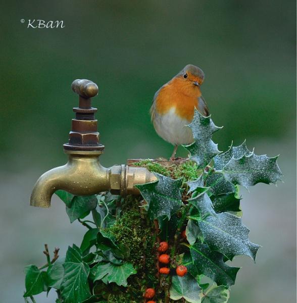 Winter Robin by KBan