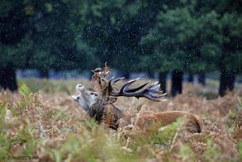 Under the rain