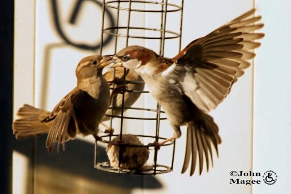 Beaky Blinder by Jmag60