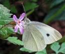 Large White On A Tiny Flower by KarenFB