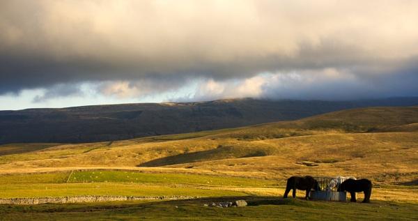 Sedburgh Horses by Grumby