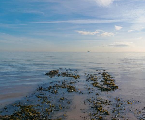 Outgoing tide. by franken