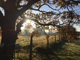 Autumn Breaks Through