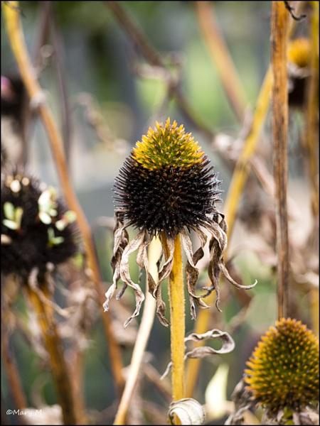 Dead Flower by marshfam19