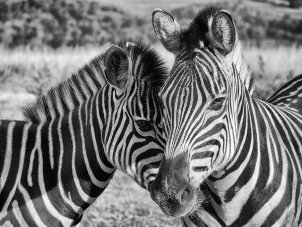 Black and white ... by chrisdunham