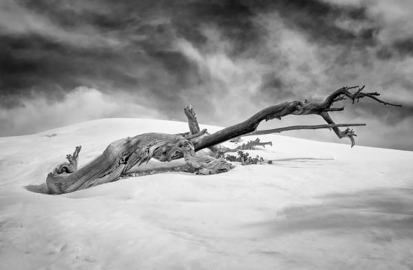 Alone by mlseawell