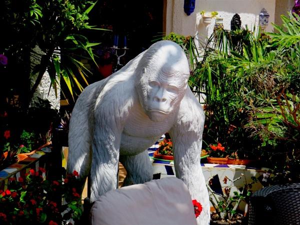 White gorilla by ddolfelin