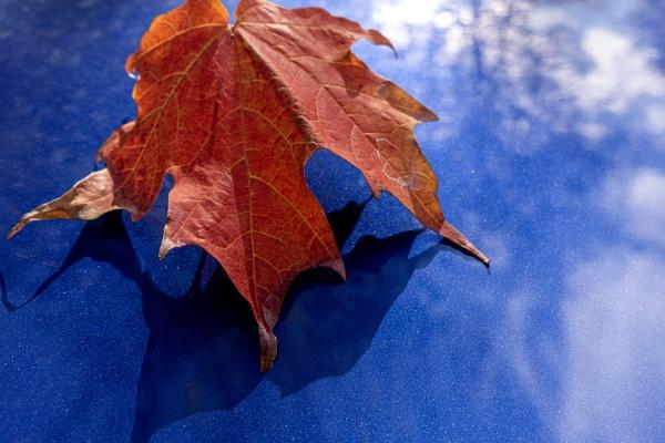 Blue & Red by manicam