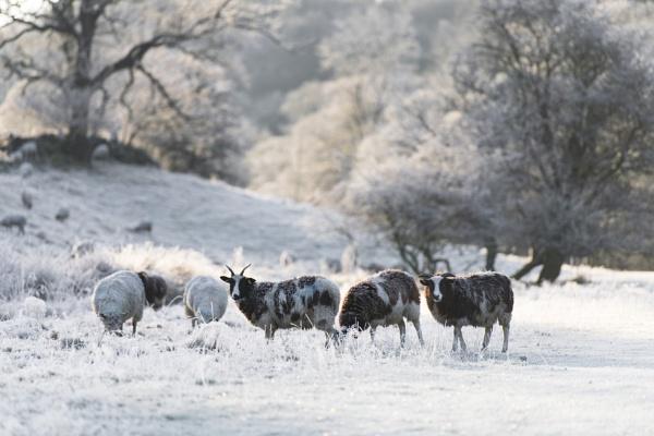 Winter Woollies by Trevhas
