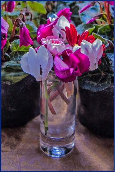 shotglass display... by estonian