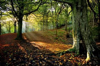 Woodland tree views