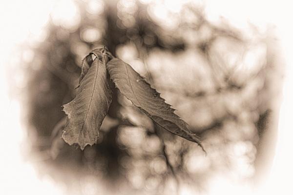 Frail by LoryC