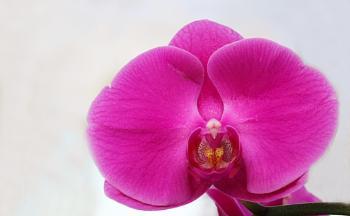 Here he is again, Tony, AKA Orchid Man.  :))