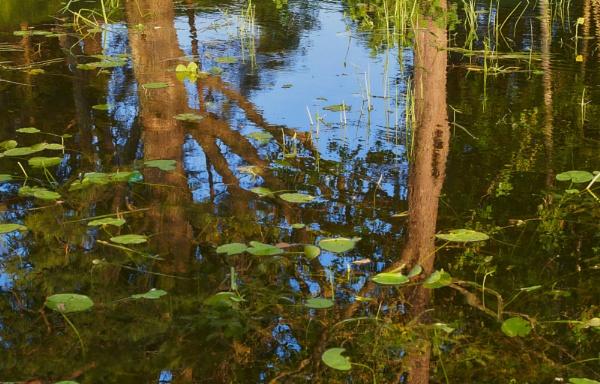 Reflection by LotaLota