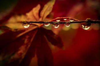 Raindrops.....