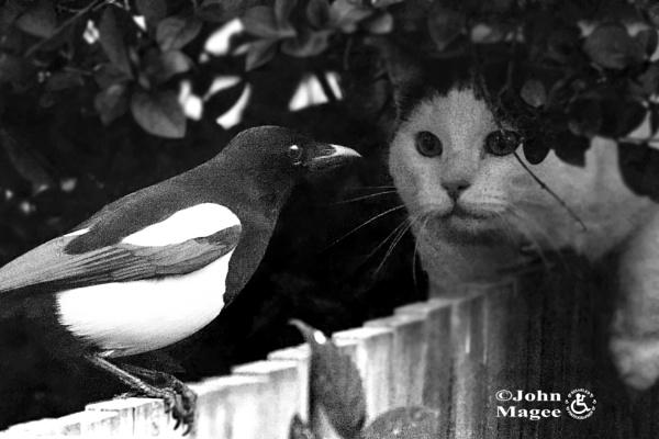 Cat vs Magpie by Jmag60