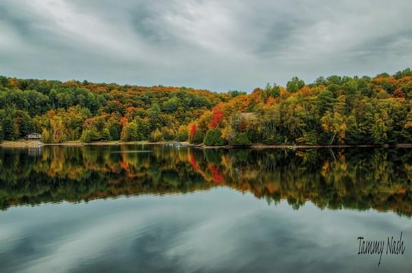 Reflection by TammyN