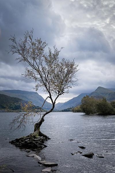The Tree by photographerjoe