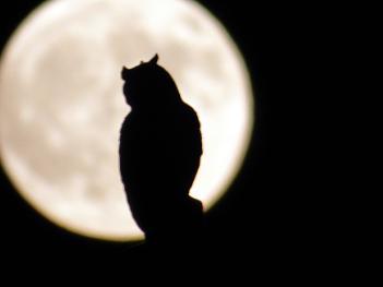 Moon & Owl