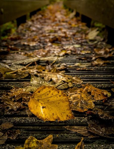 Autumn Leaf by happysnapper