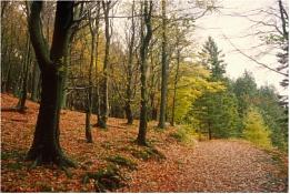 Path to Harrop Tarn