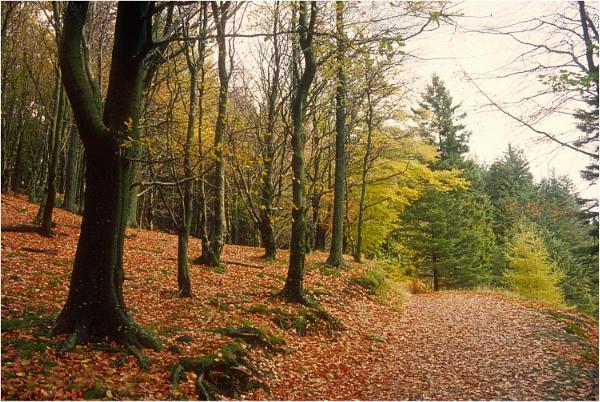 Path to Harrop Tarn by dark_lord