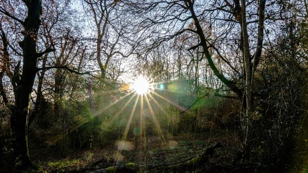 Sunburst by woodini254