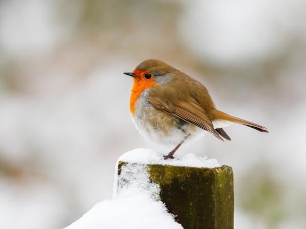 Robin of sherwood by stevejn