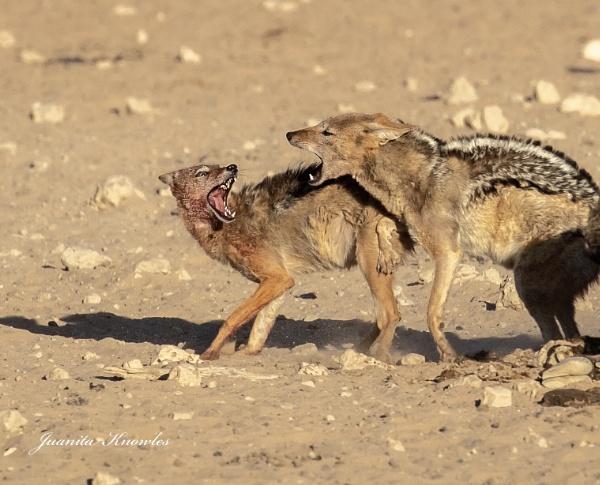 Marital Disagreement? by Juanita