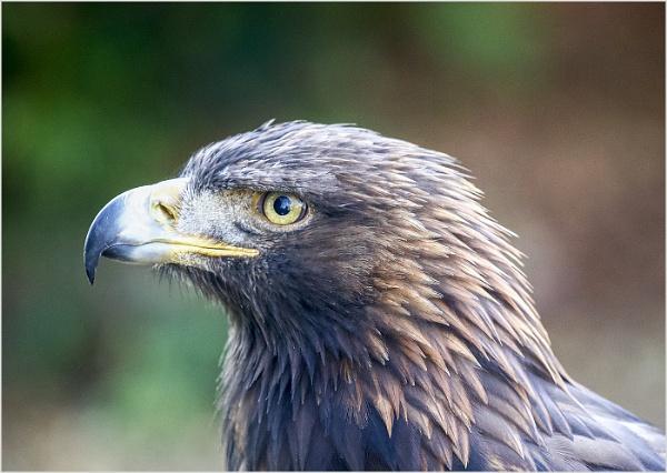 Where Eagles Dare by AnnetteK