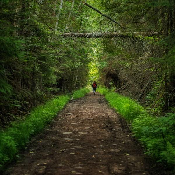 Mizzy Trail  by TammyN