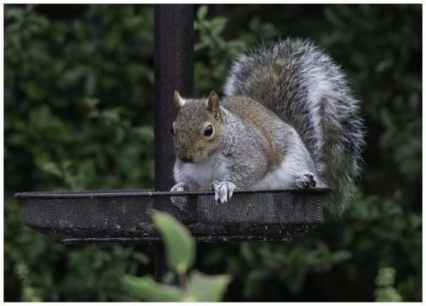 Garden Intruder by davidgibson