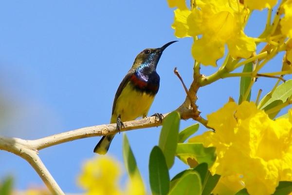 sunbird by colin beeley